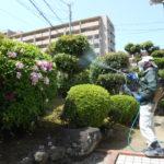 庭木の薬剤散布(消毒)