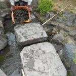 庭の池の清掃