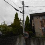 コニファーの伐採(奈良市)