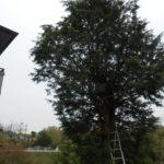 高木伐採 奈良市