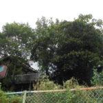 高木伐採・枝落とし・草刈
