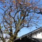 高木伐採(奈良市)