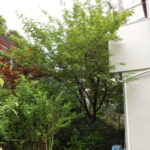 樹木伐採 奈良市