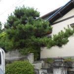 庭木せん定・枝落とし 奈良市